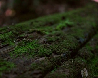 Macro Shot of Log in Forest Print
