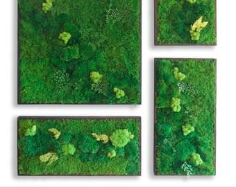 "58x58"" Real Preserved Moss Wall Art Green Wall Collage No Sticks. No care green wall art. Real preserved moss and ferns, cedar wood"