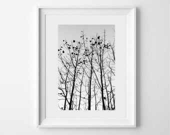 Black and white original fine art photography print - scottish photography - silhouette - winter trees