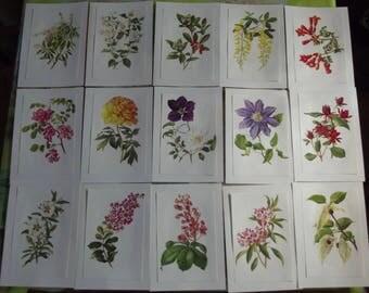 15 posters Botany Herbarium garden 1972 seringa-citronella, Peony, cists, horse chestnut, Campsis radicans, Davida, Clematis Lasurstern