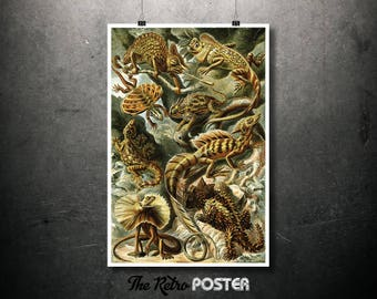 Lacertilia (Lizards) - 1904 English as Art Forms in Nature by Ernst Haeckel - Botanical Poster Vintage, Kitchen Decor, Advertising