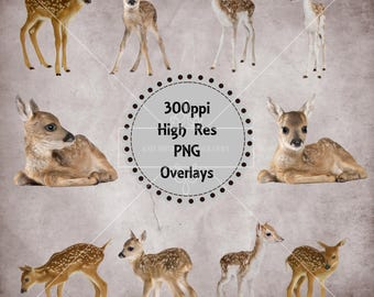 Baby Deer / Fawn Overlays, Separate High Resolution Png Files, Instant Download.