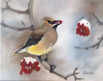"Original oil painting ""Cedar waxwing""  8x12"" on gallery wrap canvas."