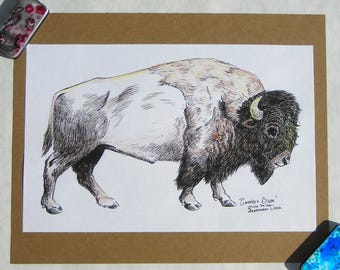 Rustic American Bison/Buffalo--8x10 Original Drawing in Prismacolor Pencils