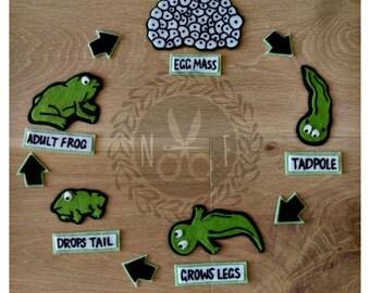 Frog Life Cycle Felt Kit
