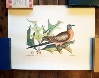 Mark Catesby Bird Prints by Dietz Press, Williamsburg Restoration.