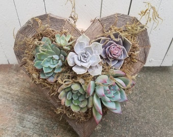 Planted Succulent Heart (small)