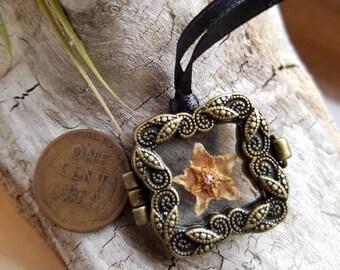 Pressed Hoya Flower Locket