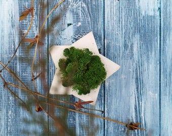 Star, scandinavian decor, wedding decor, geometry, stabilised moss
