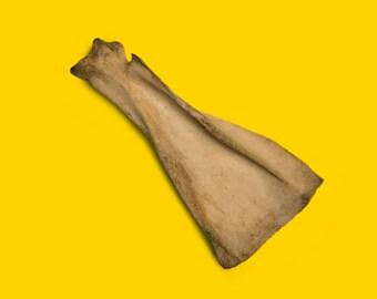 Less Dramatic Bone #545
