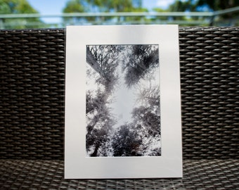 "Nature Photography, Yosemite, Sequoia, 12x16"" matted print, wall art, matted photo, 8x12 print"