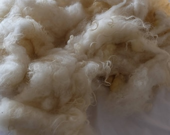 Wash raw wool by the Ouessantschaf,