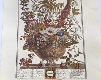 Beautiful Haddads Fine Arts Print Heavy Paper from Robert Furber Kensington Gardens 1730 Months of Year December