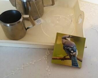 Unique Handmade Jay Bird Design Ceramic Coaster