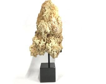 Stalagmite on Coral, Mineral, Rock