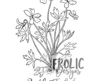 Barefoot Trefoil Sketch Print