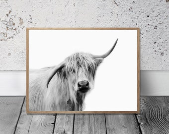Cow Print, Highland Cow Art Print, Digital Print, Farm animal Wall Art, Country Cottage Decor, Kitchen Art, Cattle Photo, Bull Portrait