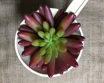 High Quality Artificial Succulent, Dudleya Pick On Stem, Red/Green, 8.5cm Wide Plant