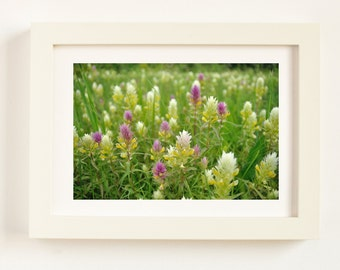 Green Grass Photo, Green Print, Nature Poster, Summer Photography, Nature Wall Decor, Green Wall Art, Plant Foto, Meadow Flowers, Healthy