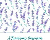 A Fascinating Companion: Marriage Enrichment Curriculum & Commentary