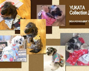 犬浴衣 *Custom made YUKATA for dogs.*