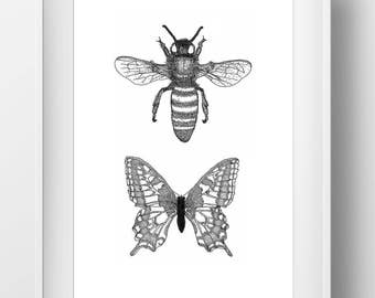 2 Insect Print: Bee and Butterfly