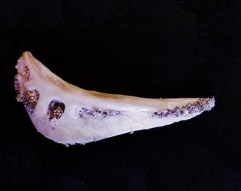 Fishbone Sculpture