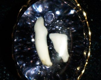 Real Cat Tooth Cabochon Gold Pendant