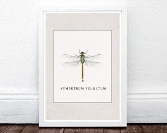 Dragonfly Print, Dragonfly Wall Art, Insect Art, Nature Photography, Insect Photo, Large Wall Art, Vintage Wall Art, Vintage Decor, Beige