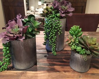 Succulents in rustic tin planters - Set of 3