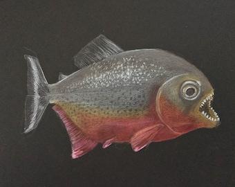 piranha study on black paper