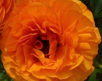 Tangerine Dream Placemats