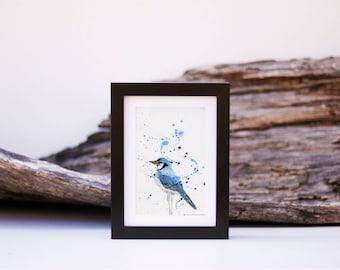 Blue Jay 1 - small