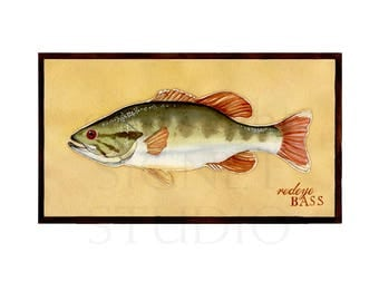 fine art giclee, fishing, Bass, gifts, decor, men, Father's Day, dad, fish