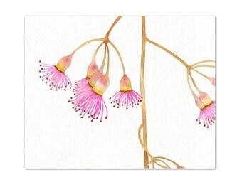 Eucalyptus Flowers // archival print