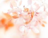 Hydrangea Flower Photography, Abstract Art,  Orange Pink Decor, Fine Art Print, Cottage Chic Wall Art