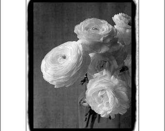 Ranunculus Print, Black and White Photography, Wall Art Print, Flower Photography, Still Life Photography