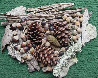 Assorted Nature's: Acorns, Weathered, Lichen Covered Wood; Winged Elm, Tree Fungus; Oak Bark and Pieces (3)