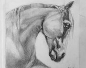 Graphite Fast and Dirty Drawing Horse on Drawing Paper Equine Art
