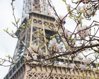 Paris Photography, Magnolia Season, Paris in the Springtime, Eiffel Tower, Paris Home Decor, Blush Pink, Paris in Bloom, Pink Wall Art