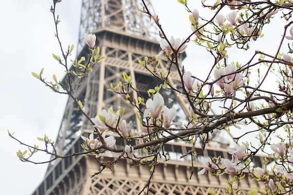 Paris Photography, Magnolia Season, Paris in the Springtime, Eiffel Tower, Paris Home Decor, Blush Pink, Paris in Bloom, Pink Wall Art