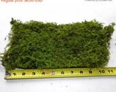 7days Sheet Moss Preserved-Delicate Fern Moss-Quart Bag your color choice-Wedding decor-Wreaths-Terrarium moss-wedding moss-NO water needed