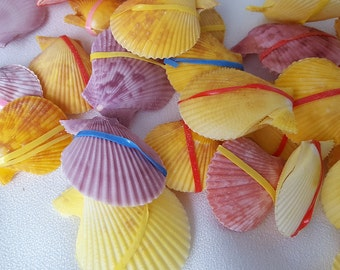 Beach Scallop Shell Pairs, Nautical Decor Scallop Seashells, Scallops, Small Scallop Sea Shell Pairs, Colorful Scallop Shell Pairs, 3PCPC