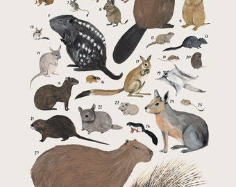 Creatures of the order Rodentia