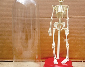 Vintage Skeleton Medical Model Plastic with Display Doctor Nurse Art Human Anatomy Science Education.