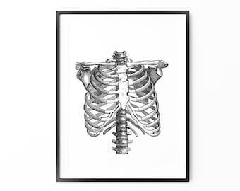 Rib Cage Print, Vintage Art, Anatomical Print, Large Wall Art, Oversized Art, Modern Vintage Home Decor, Trending Items, Trending Now