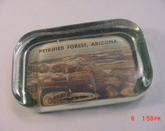 Vintage Petrified Forest Arizona Paperweight  17 - 84