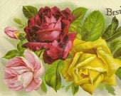 Trio of Lifelike Roses Red Pink and Yellow – Elegant Best Wishes Vintage Postcard