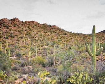 Desert Cactus Photography Print Fine Art Arizona Saguaro Cacti Red Rock Mountain Rustic Southwest Winter Landscape Photography Print.