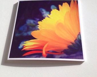 Square Greeting Card - Marigold